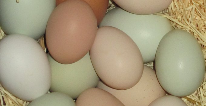 green eggs, brown eggs, tan eggs, miniature eggs