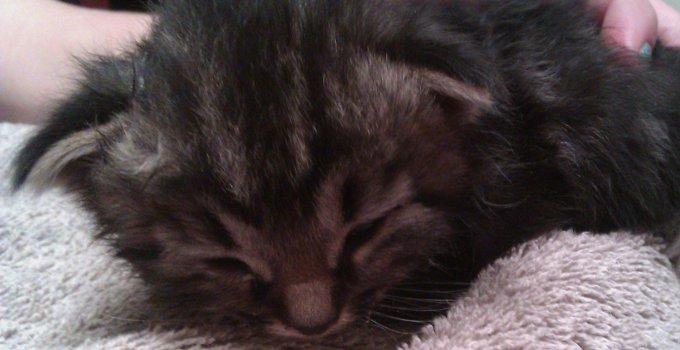 Feral Kittens?!