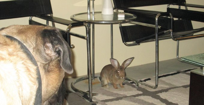 peabody and his bunny
