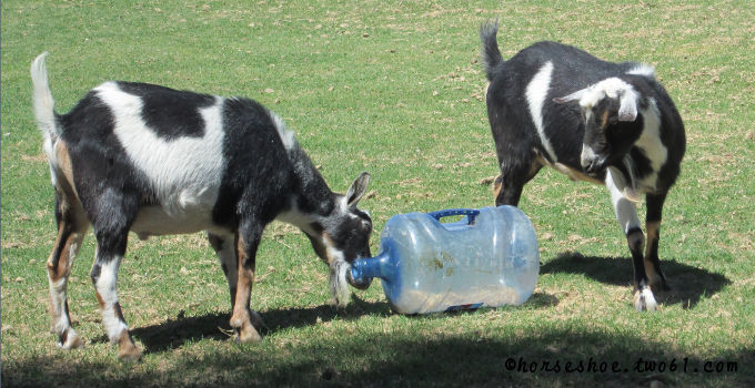 Goat Toys