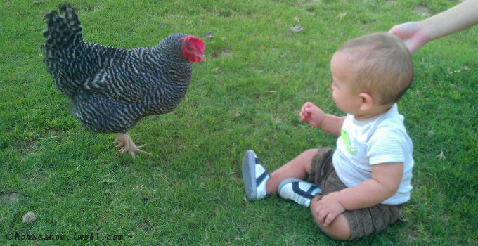 baby and a chicken