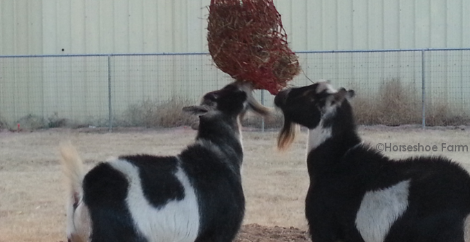 Goat Toys: The Hay Net