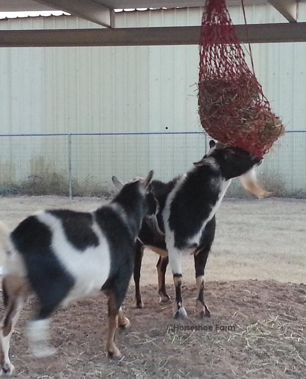 hay net goat toy
