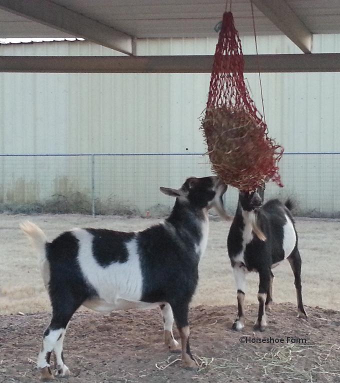 goat toy hay net