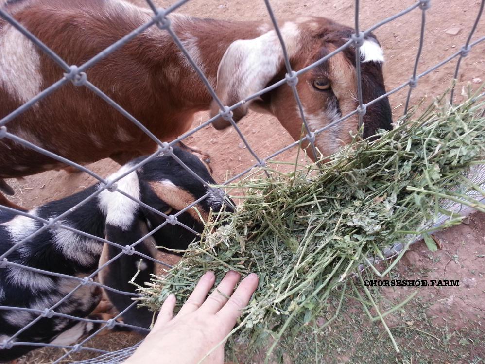 Diy Hay Feeder Horseshoe Farm